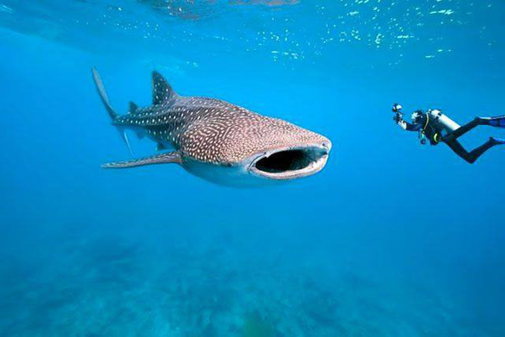 Diving Packages Belize