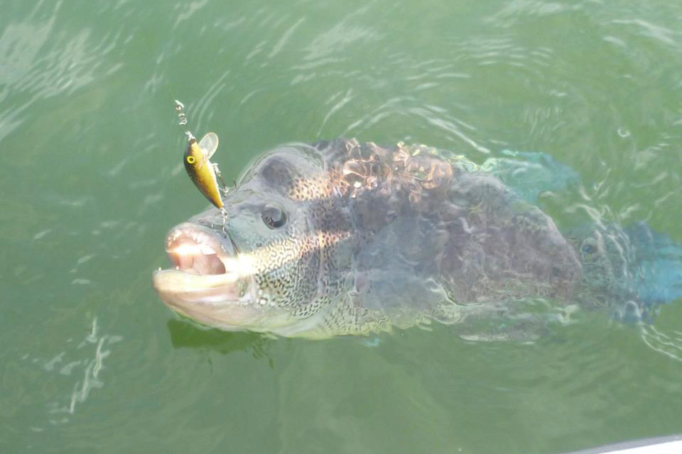 Costa rica fishing for Costa rica fishing packages
