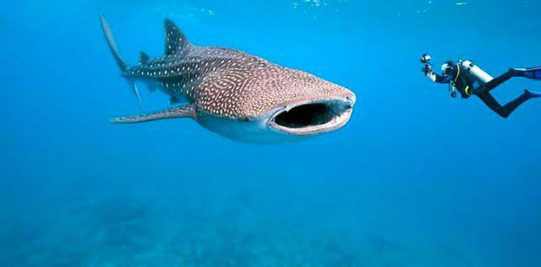 Belize Scuba Diving and Fishing Packages