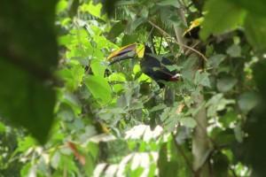 Arenal Birdwatching