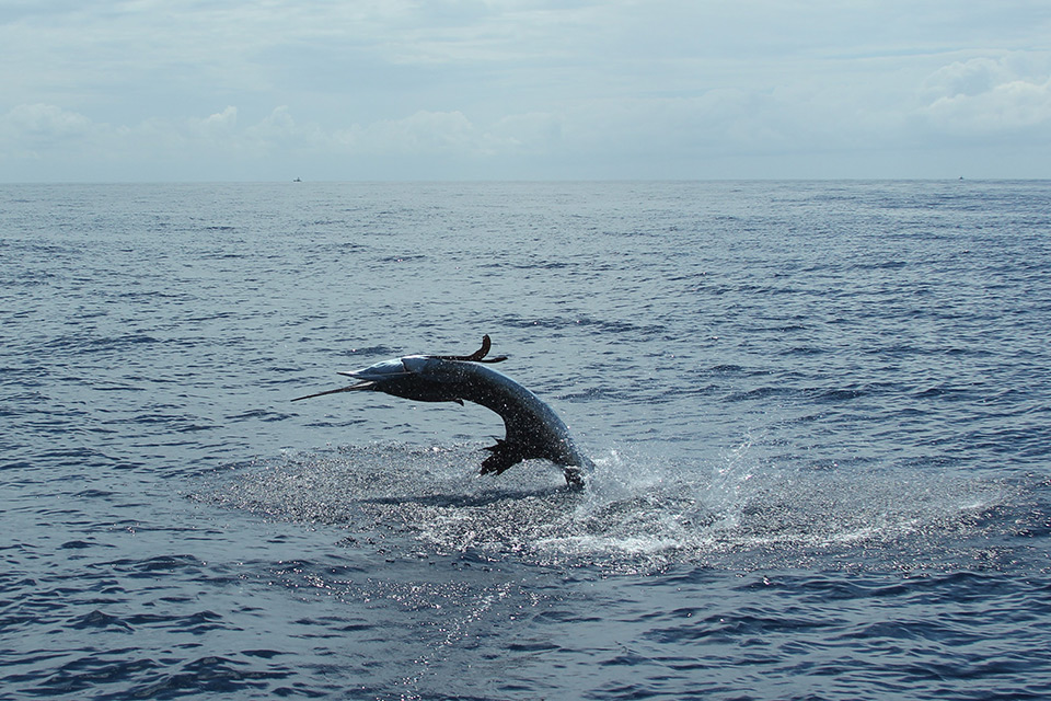 Costa Rica Fishing Packages Costa Rica Fishing Vacation - Costa rican vacations