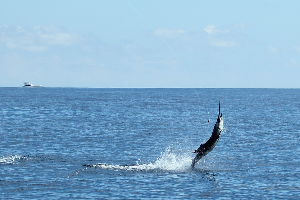 Costa rica top sport fishing destinations for Tamarindo costa rica fishing
