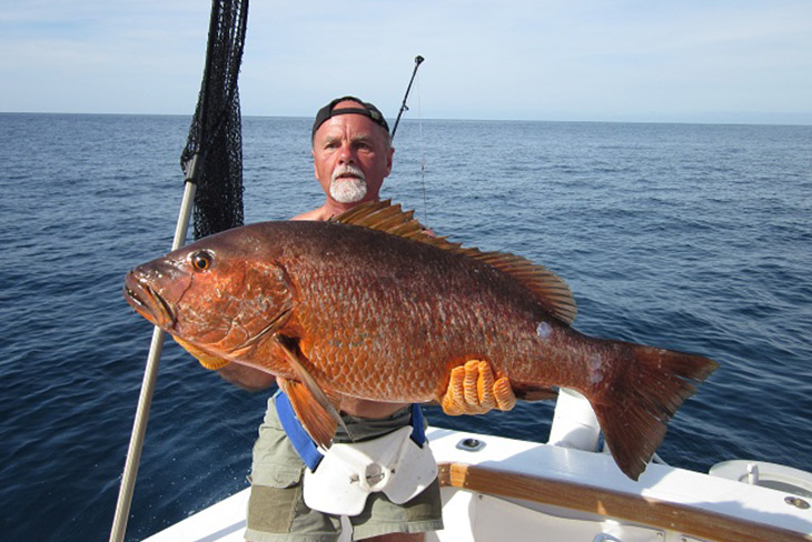 Cubera Snapper in Panama
