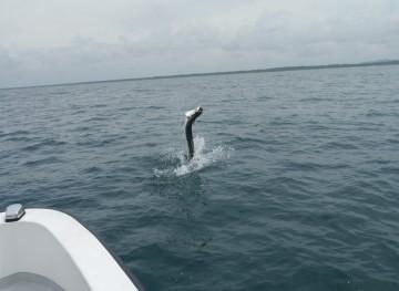 Panama Fly Fishing and Panama Canal Fishing