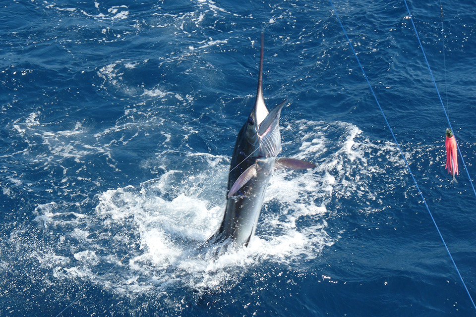 Costa Rica Fishing Trips