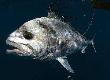 Inshore Fishing Panama