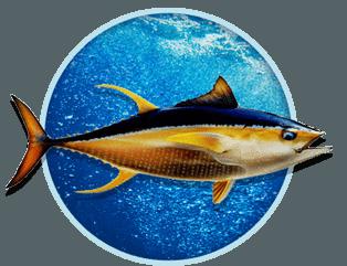 Panama Tuna Fishing Season