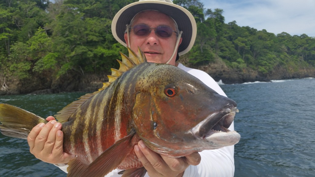My dad's first fish in Panama, a nice rock snapper