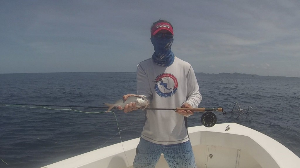 Baby amberjack caught on the fly.