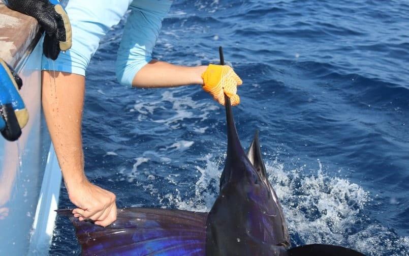 Costa Rica's Peak Billfish Season