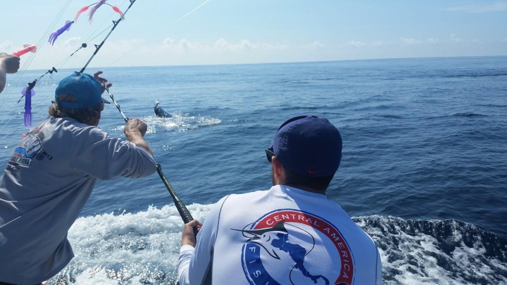 Costa Rica sailfish