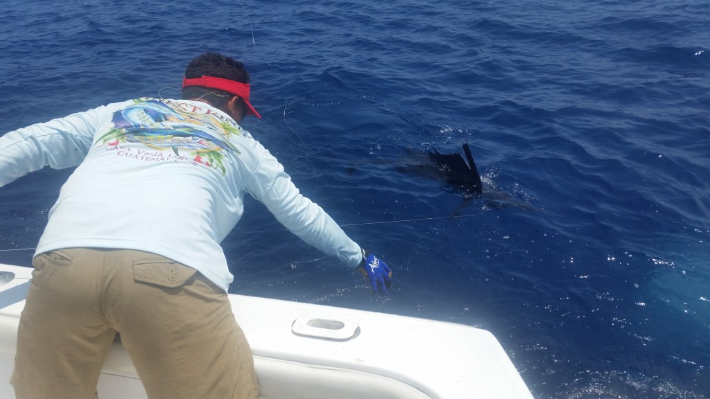 Jose leadering one of our sailfish