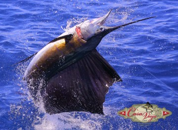 Sailfish Central America