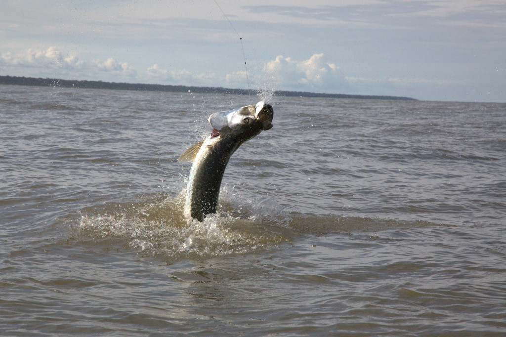 tarpon fishing Costa Rica