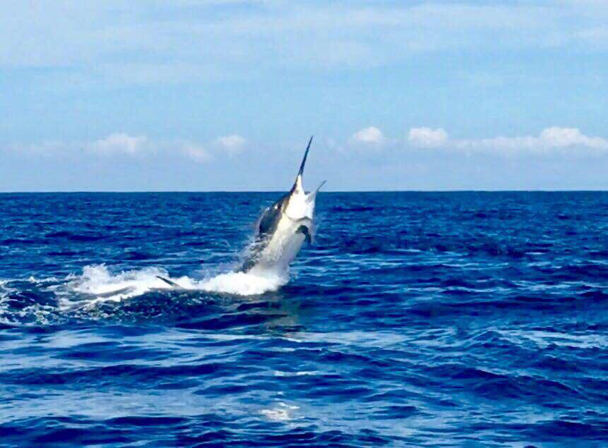 Black Marlin Los Suenos