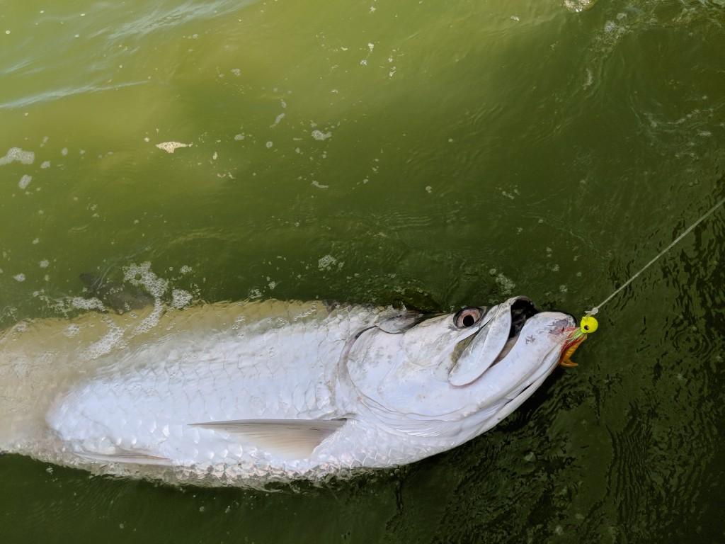Tortuguero tarpon fishing