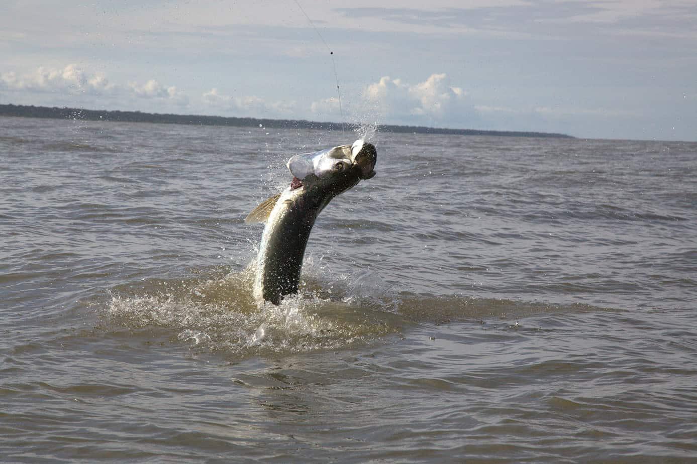 Panama Tarpon Fishing packages