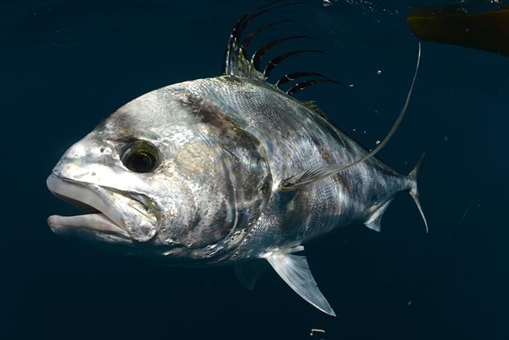 Inshore Fishing in Central America