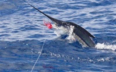 Costa Rica Fishing Report – March 2019