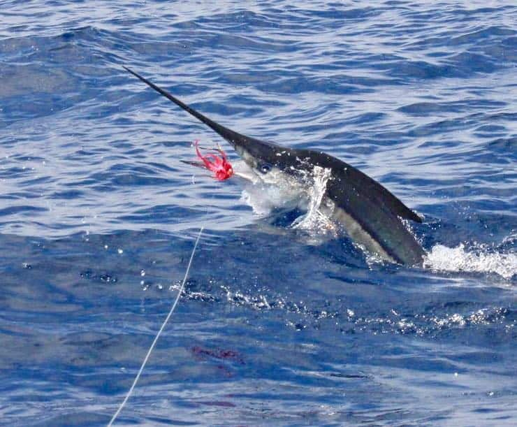 Costa Rica Fishing Report – March 2019