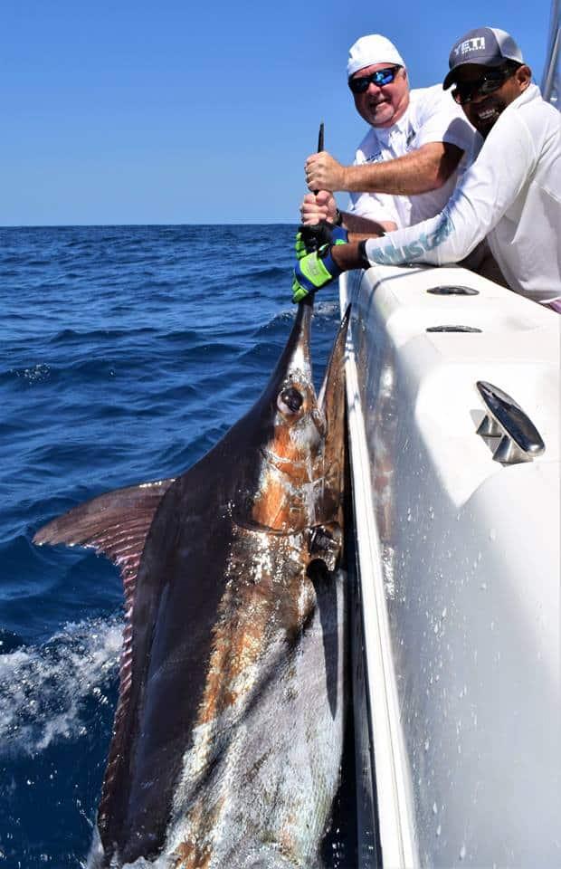 Marlin fishing at the Hannibal Bank