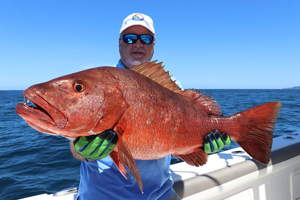 Cubera snapper catch and release in Panama