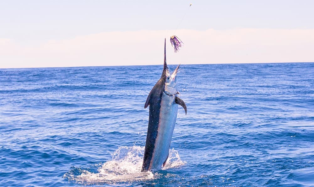 Offshore Fishing in Central America