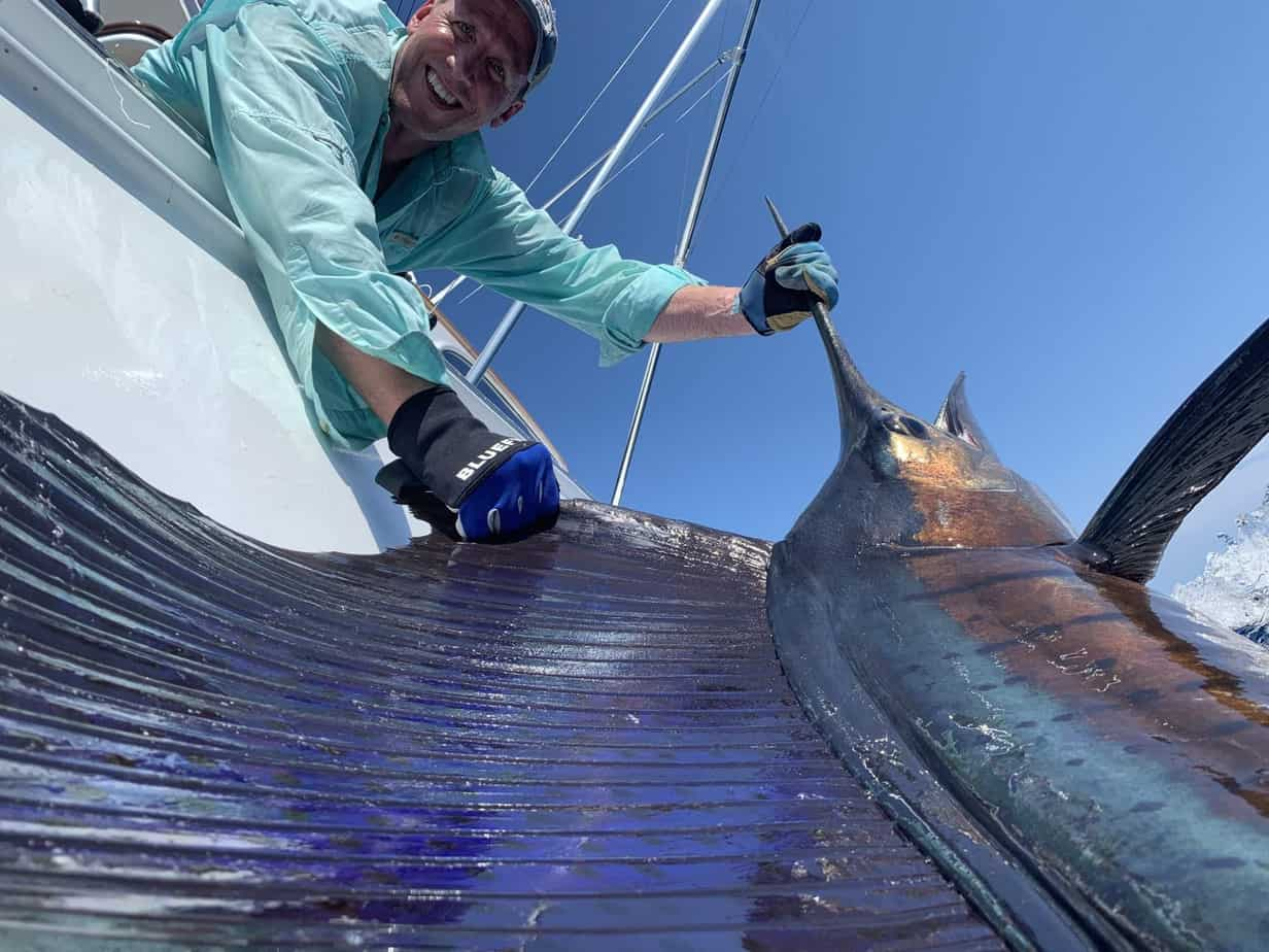 Pacific sailfish at Los Suenos, Costa Rica