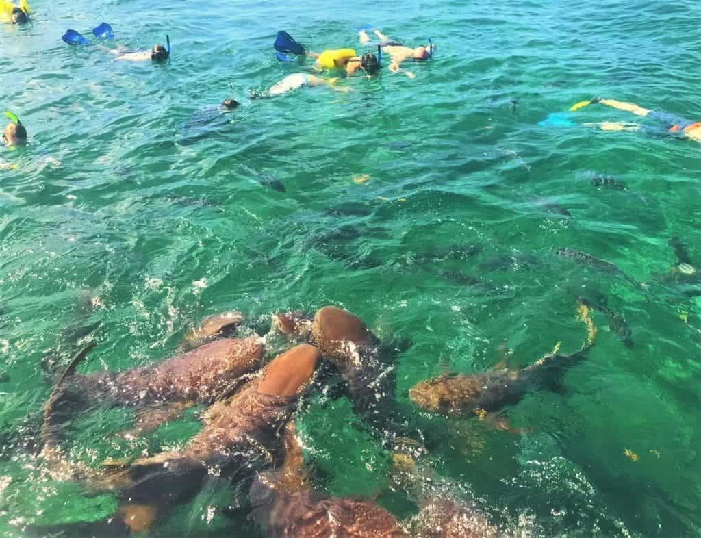 Snorkeling at Hol Chan Marine Reserve