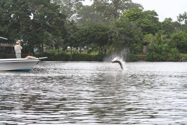 Tarpon fishing in the freshwater canals of Tortuguero, Costa Rica