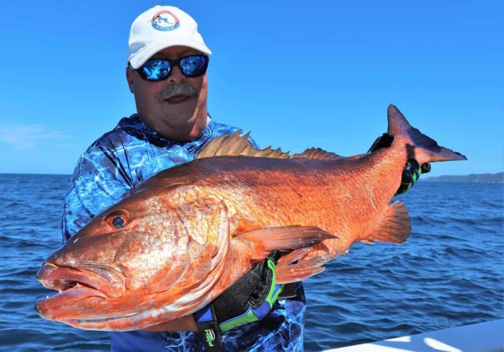 catch and release cubera snapper