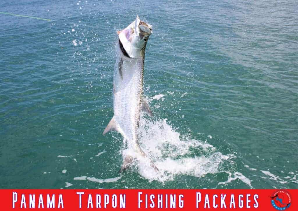 Panama Tarpon Packages